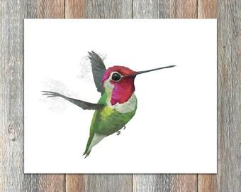 Anna's Hummingbird Bird Print