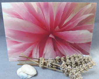 Pink Peoni II, Photographic card, notecard, botanical, flower, natural, for her
