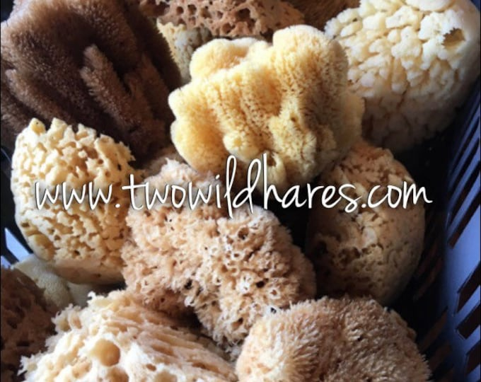 SEA SPONGE, Luxury Natural Sponge, Sustainably Harvested, Two Wild Hares