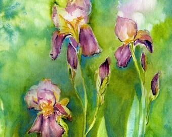 Iris painting, Flower Painting, garden art, Watercolor painting, Wall Art, in watercolor, spring green and purple, 8 x 10 giclee print,
