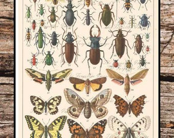 Vintage Digital Insect Chart, Bug Chart, Insect Printable, Instant Download, Jpg File