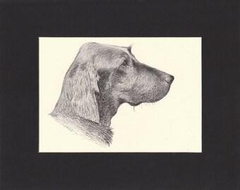 Irish Setter Print C.Francis Wardle Original 1935 Bookplate Drawing Mounted with Mat Irish Setter Vintage Dog Print