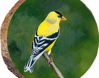 Goldfinch - DAI035