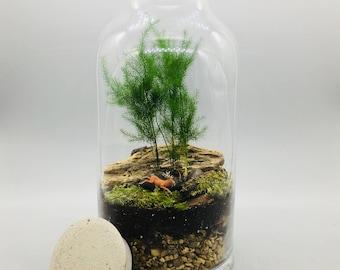 Terrarium kit with Glass Jar and Concrete Lid, DIY Terrarium Kit