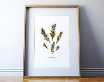 Rosemary Watercolor - Herb Watercolor - Painting of Rosemary - Art Print - Kitchen Art