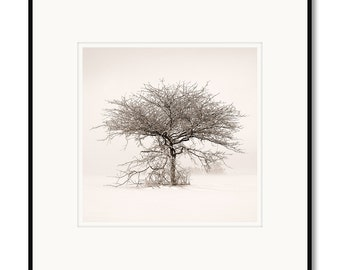 Winter tree landscape, Northern Colorado, photography, black and white, sepia warm tone, framed photo by Adrian Davis, limited edition photo