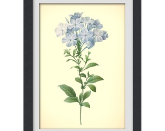 Botanical Print, Redoute art, Floral Printable blue flower, 8x11 botanical art print from a vintage book plate. #INSTANT DOWNLOAD 29