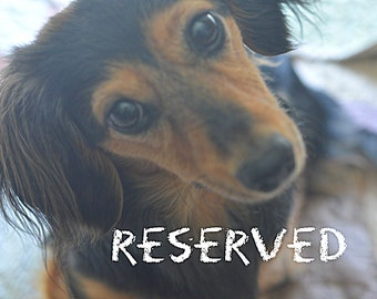 RESERVED for BRIEANNA