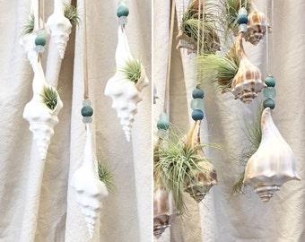 hanging shell gardens
