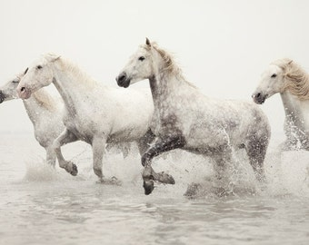 Fine Art Photography, Horse Photography Print, Horse Art, White Horses Running in Water, Winter Nature Print, Animal Photograph - Breathless