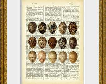 EGGS 07 - old book page art print - upcycled antique dictionary page with an antique egg illustration - vintage home decor - kitchen art