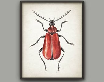 Beetle Watercolor Art Print, Insect Painting, Beetle Room Decor, Cardinal Beetle Wall Art, Beetle Poster, Kids Room Bug Wall Art B770