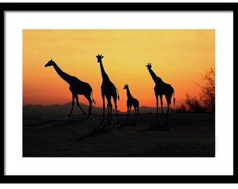 Giraffe family silhouetted at sunset in African Serengeti