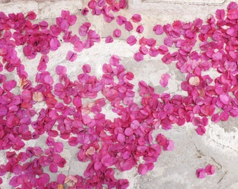 "Pink White Wall Art -  Bougainvillea - Flower Petals - Greece Travel Photography - Abstract Pink Art - Large Wall Art  ""Bounty of Flowers"""