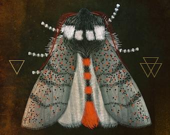 Moth and Geometry III