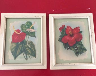 vintage shabby chic botanical/ floral pictures