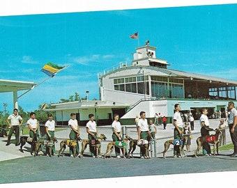 Vintage Florida Chrome Postcard Racing Greyhound Dogs Bonita Springs US 41 Naples Ft Myers Kennel Club USED