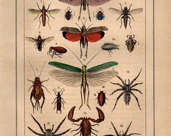Rare 19th Century Hand colored Insects Print grasshopper cricket tarantula scropion flea louse decorative art wall art Natural history print