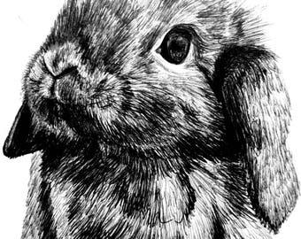 Rabbit, drawing