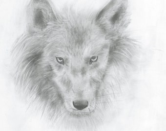 Wolf Head Two - A4 Print