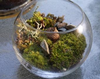 Moss Terrariums fairy garden
