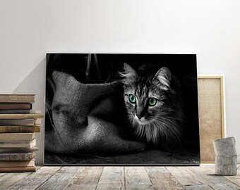 black and white cat, fine art, wall decor,photrographic print, animal, photo