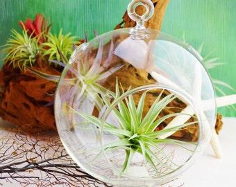 """Medium Round Terrarium  ~ Hanging Glass Orb ~DIY ~ 6"""" Terrarium ~ Build your own terrarium ~ 1 pc ~ Orb Only ~ Hanging or Sitting Terrarium"""