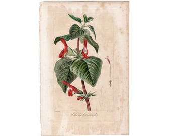 1836 FLOWER ENGRAVING by Bessa - red flowers original antique botanical engraving print - salvia leonuroides