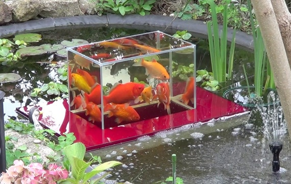 Flying aquarium linear 2500 red fish observatory observation for Fish tank in pond