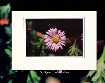 04.28 Jumbo Outback Daisy Individual Note Cards
