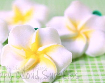 Polymer Clay Plumeria Frangipani Flowers in White and Yellow... 6pcs