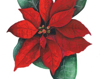 Stella di Natale [poinsettia]
