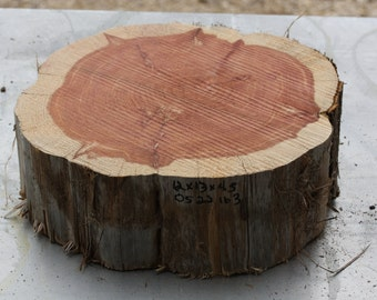 "Large Tree Slab, Texas cedar tree, thick wood slice, unfinished wood, woodworking supply, DIY top for table, plant stand, 12""x13""x4.5"" tall"