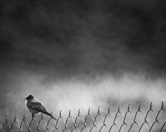 "Black and White Photographic Print, Bird Fine Art, Nature Photography, Wall Decor, Animal Home Decor - ""AWS Fence"""