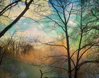 """Surreal landscape photography dreamy woodland forest trees woods nature  - """"Winter trees""""  8 x 10"""
