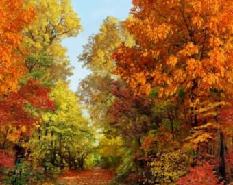 Trees Autumn American Byways Spectrum Digital Print Hoffman Fabric 1 yard