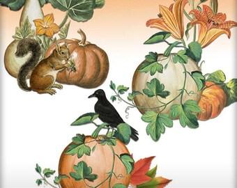 Fall Themed Element Clusters - Pumpkin - Set #2 - 3 PNG - Seasonal Clipart - Digital Art Scrapbooking - Journal Clipart - Cardmaking Images