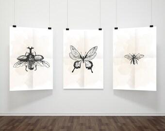 Vintage Insect Poster, Vintage Print, Printable Poster, Vintage Wall Art, Insect Print, Insect Poster, Digital Print, Butterfly Print