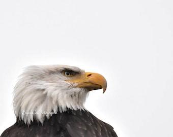 Eagle Photo Bird Photography Man Cave For Him Bald Eagle Bird Wall Art Bird Photo Print Bird Lovers Gift Nature Photography Wild Bird Art