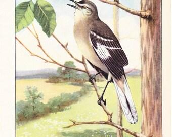 1926 Bird Print - Mocking Bird - Vintage Antique Natural History Home Decor Art Illustration for Framing