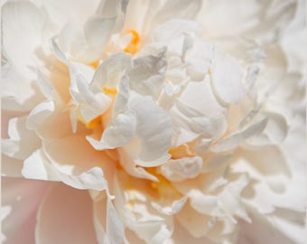 PRINT:  Up Close Peony