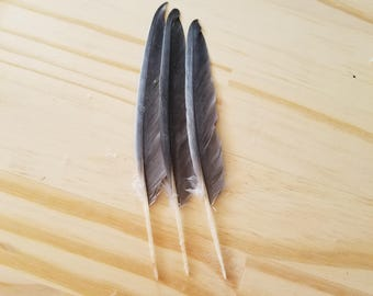 Parrot Feathers Cruelty Free Humane Naturally Molted Real Feathers #a54