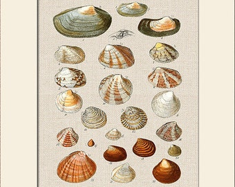 Sea Shell Print, Plate 4, George Sowerby, Art Print with Mat, Note Card, Natural History Illustration, Wall Art, Nautical Art, Costal Decor