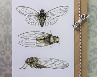 3 sepia cicadas greeting card. Blank inside.