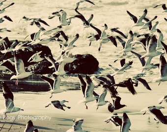 In Flight - Photo of Seagulls taking off on a California Beach, Nature Photography