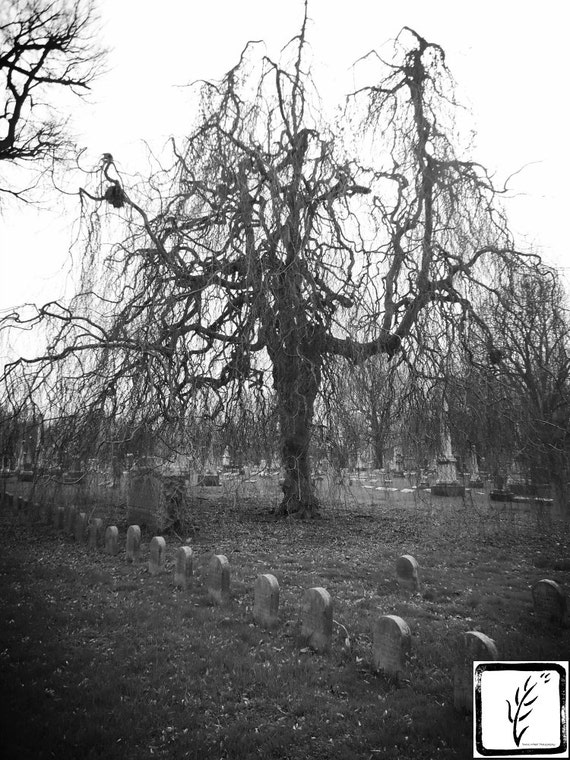 """Orphelins Tree,"" Central Presbyterian Orphans Asylum section, Crown Hill Cemetery, Indianapolis, Indiana, 2013."