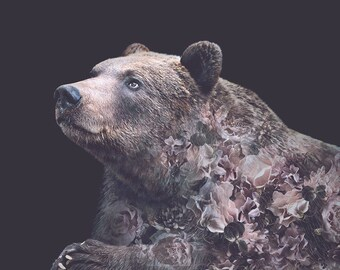 Grizzly Bear Flower Portrait – Faunascapes Art Print by WhatWeDo