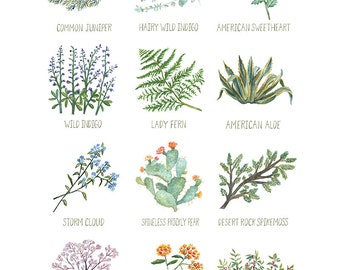 North American Plants Art Print