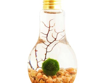 Marimo Moss Ball Light Bulb Water Terrarium / Great Gift / New Pet / FREE SHIPPING