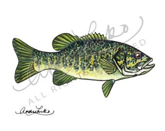 "Watercolor Smallmouth Art Print 8.5""x11"""